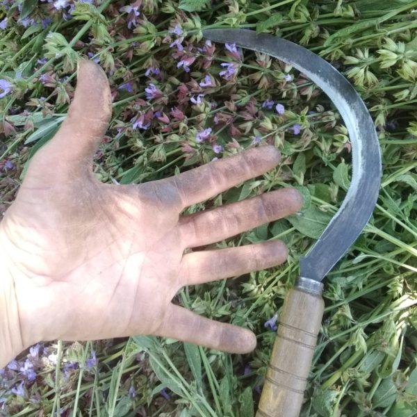 Récolte Pin sylvestre